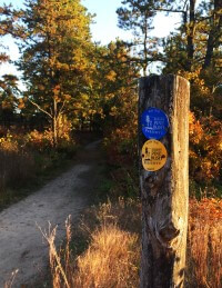 A trailside post with blue and yellow trail markers.